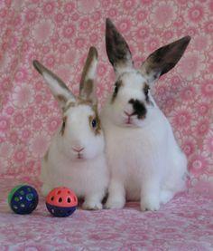 Bunnies pose for a couple's portrait - March 9, 2013