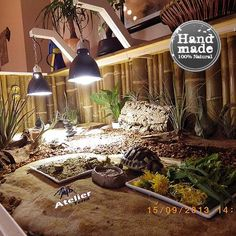 Schildkröten-Terrarien - Atelier Terra - that's what I call a home for tortoises! Tortoise Cage, Tortoise House, Tortoise Habitat, Turtle Habitat, Baby Tortoise, Sulcata Tortoise, Tortoise Turtle, Tortoise Food, Turtle Enclosure