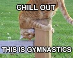 Image result for animals doing gymnastics