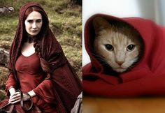 Cat Accidentally Does Spot On Melisandre Cosplay From Game of Thrones