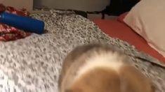 Handmade Welsh, Mix and Cardigan Corgi Resin Figure Cute Funny Dogs, Cute Corgi, Cute Funny Animals, Cute Baby Animals, Animals And Pets, Cute Animal Videos, Cute Animal Pictures, Cute Dogs And Puppies, Funny Animal Memes