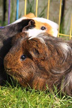 In de buitenren - genieten! http://www.wesdijk.nl/buitenhokken-rennen/30302-konijnenren-6-delig-8712695063124.html
