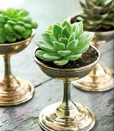Arrange succulents or other small plants in vintage ice cream dishes for the perfect dinner table centerpieces. Arrange succulents or other small plants in vintage ice cream dishes for the perfect dinner table centerpieces. Succulent Pots, Cacti And Succulents, Planting Succulents, Planting Flowers, Succulent Display, Succulent Ideas, Indoor Succulent Garden, Cactus Plants, Succulent Containers