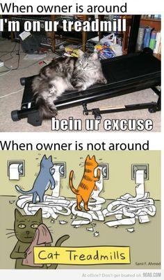 Cats Logic- lolll @Megan Mccalester