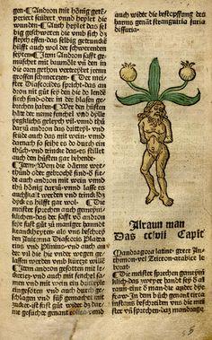 Mandragora, male [Alraun man], 1487, Hamsen Schönsperger, Gart der Gesundheit