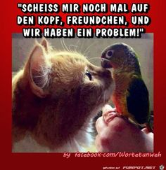 Eine von 61029 Dateien in der … funny picture & # problem.jpg & # from Renilinz. One of 61029 files in the category & # Funny & # on FUNPOT. Funny Cats And Dogs, Funny Animals, Cute Animals, Funny Picture Quotes, Funny Pictures, Funny Shit, Fat Humor, Blonde Jokes, Cat Hacks