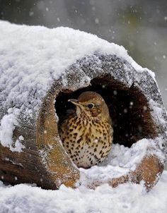 Winter...the season to take cover. #SavortheSeasons www.julielichty.com