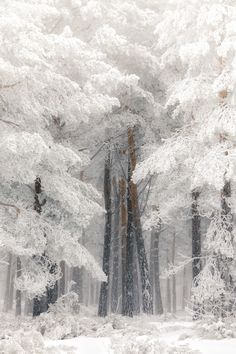 The Snowy Winter Forest - title El Bosque/The Forest - photographer Jose Devesa - - Winter Szenen, Winter Love, Winter Magic, Winter Ideas, Winter White, Beautiful Landscapes, Beautiful Images, Beautiful Beautiful, Absolutely Gorgeous