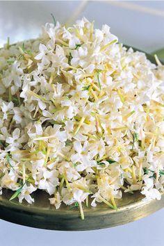 Jasmine - Fragonard PARFUMEUR #Fragonard #Flowers #Jasmine