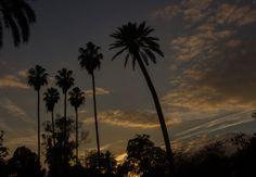 Cae el sol en la Plaza de América. Parque de María Luisa, Sevilla. Sun falling at María Luisa's Park