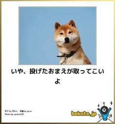 NO, Because you are throwing, you ought to pick up Cute Baby Animals, Animals And Pets, Funny Animals, Smiling Cat, Japanese Dogs, Grumpy Cat, Shiba Inu, Animal Memes, Funny Comics