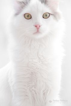 "Pretty kitty  (=^.^=) Thanks, Pinterest Pinners, for stopping by, viewing, re-pinning, & following my boards.  Have a beautiful day! ^..^ and ""Feel free to share on Pinterest ^..^   #catsandme #cats"