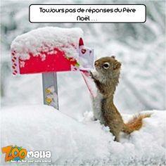 L'#écureuil attend ses #cadeaux de #Noël