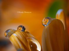 Water drops on a flower by Wendy Thompson on 500px