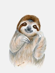 """Sloth Portrait"" Wrapped Canvas Wall Art by Brett Blumenthal from Oopsy Daisy, Fine Art for Kids. Sizing starts at 10''x14''. Additional sizes and framing options are available. Browse our entire collection of wall art for kids! Use code OOPSY10 at checkout for 10% off your entire purchase. Some exclusions apply, view offer details for more information."