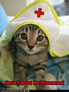 Nurse Tiny Cat