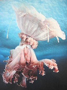 Jellyfish -looks like a Victorian Lady running in a storm, the skirt over her head...