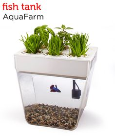 Keep a healthy home for your fish and grow your own herbs at the same time. AquaFarm's sustainable Back to the Roots fish tank from Petco's Holiday Gift Guide.