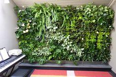 pared de estudio con jardin vertical