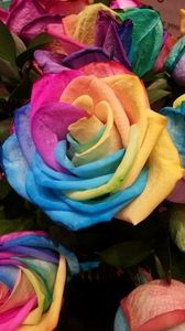 Flowers wallpapers samsung galaxy mini neo, alpha, sony xperia compact asus zenfone, desktop backgrounds hd, pictures and images Wallpaper Rainbow, Wallpaper Rosa, Rose Flower Wallpaper, Iphone Wallpaper App, New Wallpaper, Colorful Wallpaper, Cellphone Wallpaper, Wallpaper Backgrounds, Plant Aesthetic