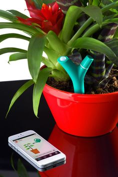 Flower power is a sensor laden gardening gadget that aims to help thumbs stay green on the go. Resembling a plastic plant stock, the small indoor/outdoor device gathers soil information and uses Bluetooth 4.0 to transmit it to your phone or tablet. Parameters monitored include the amount of sunlight the plant receives, environment temperature, humidity and soil salinity—a measure of how well nourished the soil itself is at any given moment.