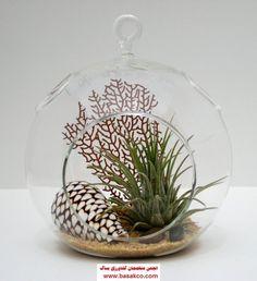 Gaultheria procumbens in a terrarium - Google Search