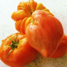 #tomatoes #garden #stroll