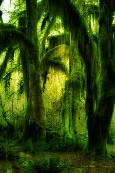 'Bearded with moss, and in garments green, indistinct in the twilight, stand like Druids of old' - Longfellow