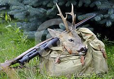 Head trophy of a buck with antlers on hunters bag. The shootgun is lying beside. Image taken outside in free nature.
