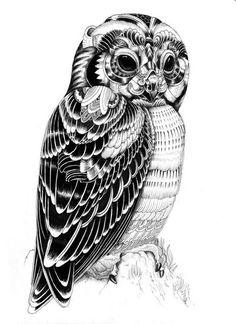iain macarthur owl - Google Search