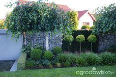 Madżenie ogrodnika  cz. aktualna The Originals, Plants, Gardens, Outdoor Gardens, Plant, Garden, House Gardens, Planets
