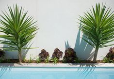 2 Small Backyard Ideas Designing Chic Outdoor Spaces with Swimming Pools – Lushome