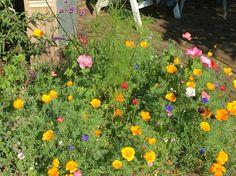 Bloemen uit Bruce Canyon