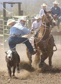 Rodeo; calf roping