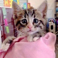 Après Grumpy Cat, on vous présente Worried Cat
