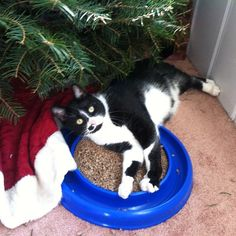 Our two black and white brother cats have not come home since Tuesday evening.   Contact: kimbarber28@gmail.com or860-581-3130. http://www.cthumane.org/site/apps/nlnet/content3.aspx?c=8qLKK1MELjI2F&b=8687071&ct=14849657&notoc=1