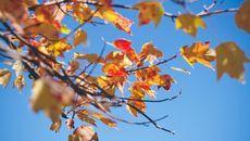Schooltv: Kale bomen - In de herfst verliezen bomen hun bladeren