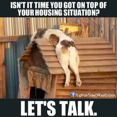 Funny Animal Pictures - View our collection of cute and funny pet videos and pics. New funny animal pictures and videos submitted daily. Funny Cat Memes, Funny Cats, Funny Animals, Cute Animals, Hilarious, Lazy Animals, Memes Humor, Jokes, Funny Cat Pictures