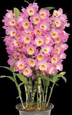 ¨´*✿*´¨ Orquídeas