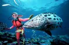 One of the world's most famous scuba diving dive sites is the Great Barrier Reef in Australia. The Great Barrier Reef, off the east coast o...