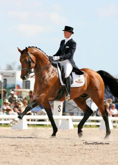 Lingh possesses many of the qualities we aim to produce for top sport—suppleness, scope, and a workman-like attitude coupled with a kind nature. His international performance career placed Lingh at the top of the index established by the World Breeding Federation of Sport Horses, ranking him the number one dressage stallion and 3rd in the world overall in 2006. His breathtaking performances at the 2005 FEI World Cup in Las Vegas, where he claimed the Grand Prix and the Silver Medal overall…