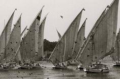 Felouques, embarcations à voile triangulaire, sur le Nil à Assouan en Égypte