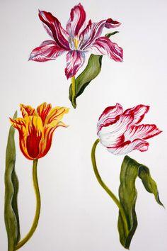 Carolyne Roehm, Watercolor. Welcome to my gardening blog http://www.facebook.com/flowerindoorgardening #tulip  #flower #bulb