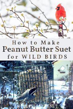 Bird Suet, Wild Bird Feeders, Homemade Peanut Butter, Homemade Recipe, Feeding Birds In Winter, Butterfly Food, Bird Seed Ornaments, Homemade Bird Feeders, Birds And The Bees