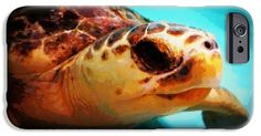 Sea Turtle Named Dewey iPhone 6 Case by Laurie Pike