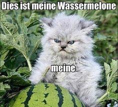 """This is my watermelon, mine."" American LOLcats speak broken English, German LOLcats speak correct German, I guess."
