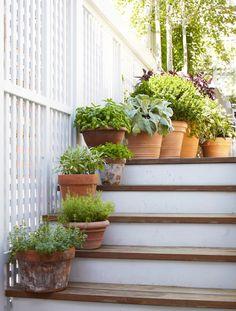 Precioso jardín en la azotea en Chicago | Tradicional Inicio