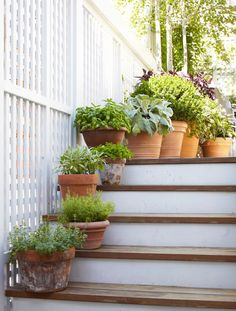 Potted plants and herbs line the steps ..