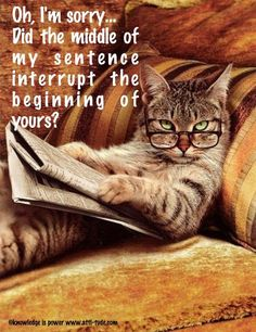 Funny animal pictures fresh from the net. Hand picked funny animal pictures of funny animals every hour. I Love Cats, Cute Cats, Funny Cats, Funny Animals, Cute Animals, Clever Animals, Animal Fun, Baby Animals, Crazy Cat Lady
