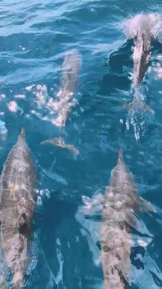 Beautiful Nature Scenes, Beautiful Sea Creatures, Baby Dolphins, Ocean Wallpaper, Nature Gif, Water Animals, Ocean Creatures, Sea And Ocean, Sea World